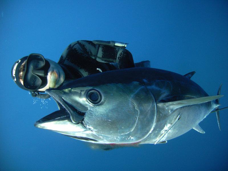 Fishing charters for snapper tuna mako marlin in port for Bluefin tuna fishing